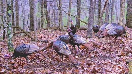Putting the Hunt Back In Turkey Hunting