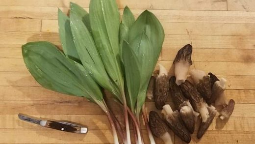Ramps, An Appalachian Delicacy by Makayla Scott
